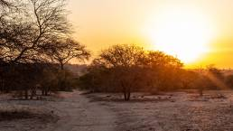 Winter in the Kruger